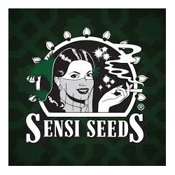 Super Skunk Feminizada Sensi Seeds